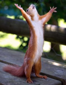 Squirrel want