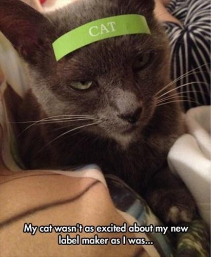 cat label