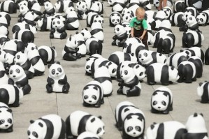 Only 1,600 pandas left in the wild