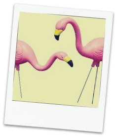 Pink Plastic Flamingos -- what they do, what they eat, where they live. DearKidLoveMom.com
