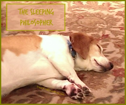 The Sleeping Philosopher. DearKidLoveMom.com