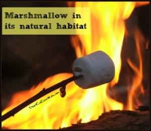 Marshmallow in its natural habitat. DearKidLoveMom.com