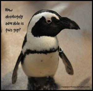 How adorable is this little penguin? DearKidLoveMom.com