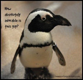 How adorable is this little penguin? DearKidLoveMom.com