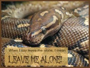 When I say leave me alone, I mean LEAVE ME ALONE! DearKidLoveMom.com