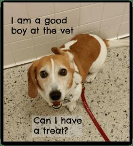 I am a good boy at the vet. Can I have a treat? Puppy Conversations. DearKidLoveMom.com