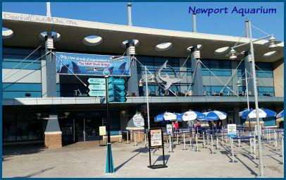 Newport Aquarium. DearKidLoveMom.com