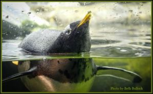 Penguins at the Newport Aquarium. DearKidLoveMom.com