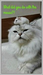 Where did you put the mouse? DearKidLoveMom.com