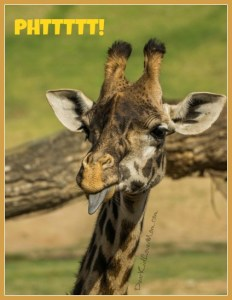 PHtttttt! Typical Teenage Giraffe. DearKidLoveMom.com