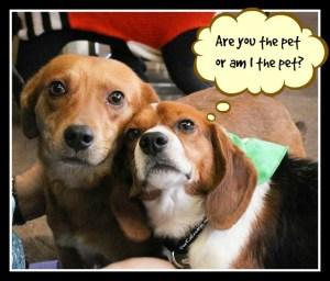 Are you the pet or am I the pet? DearKidLoveMom.com