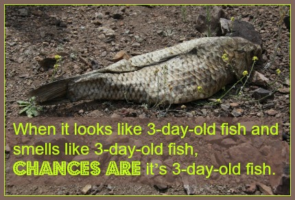 Image result for 3 day old fish
