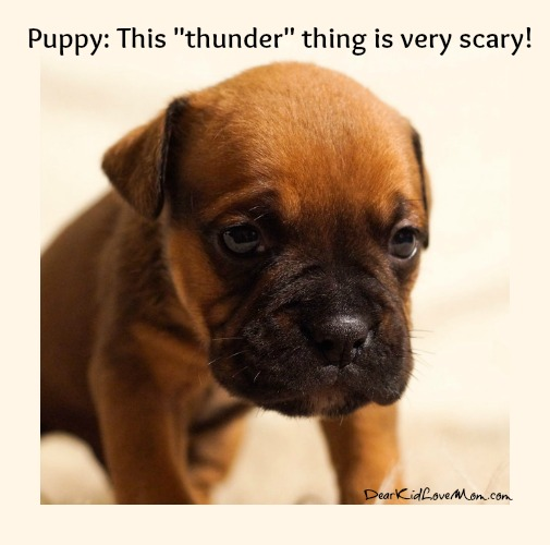 "Puppy: This ""thunder"" thing is very scary! DearKidLoveMom.com"