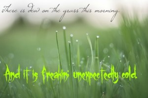 . Dew is actually zillions of teeny little droplets of water lurking with evil intent to shock the unwary into awake-ness. They work together having each agreed to the latest union terms. DearKidLoveMom.com