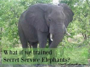 5 reasons we should have Secret Service Elephants DearKidLoveMom.com