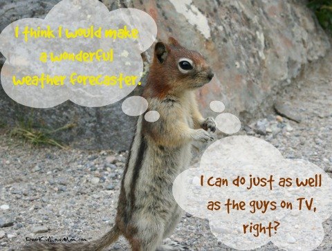 But what if other rodent-types were eligible for the groundhog's job? Can you imagine the reality show this would have made? DearKidLoveMom.com