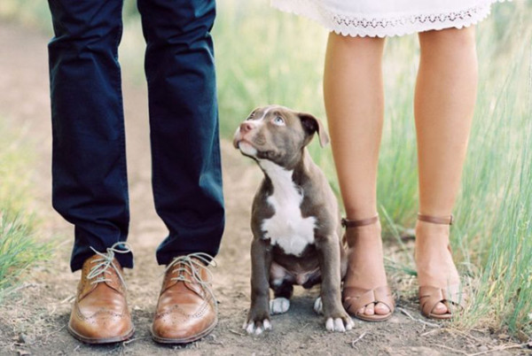 engagement-photo-ideas-with-cute-pitbull-dog-600x402