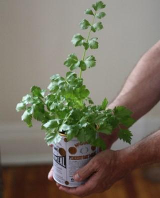 dk-spezie-ortaggi-coltivare-cucina