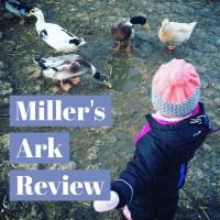 Miller's Ark Lambing Weekend