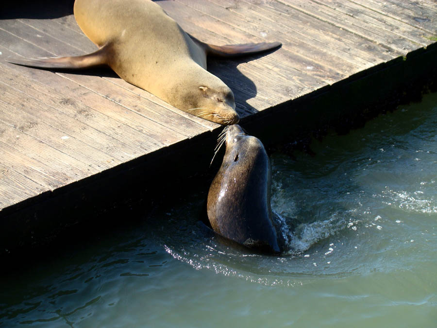 gay animals sea lions