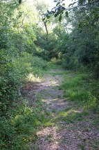 Short trail at Sabine Woods