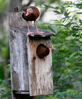 Making a home in a nesting box