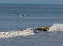 Riding a wave on Galveston Island