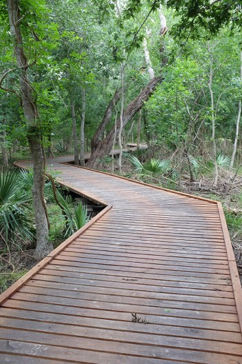 Boardwalk through the Palmettos