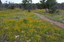 Wildflower fields near the Gorman Falls trailhead