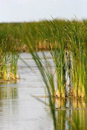 Reeds along Mocassin Pond