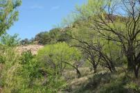 The verdant landscape along Sandy Creek