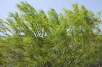 Vegetation along the Rio Grande