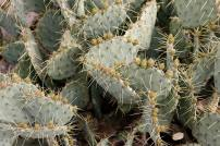 Desert flora along the trail