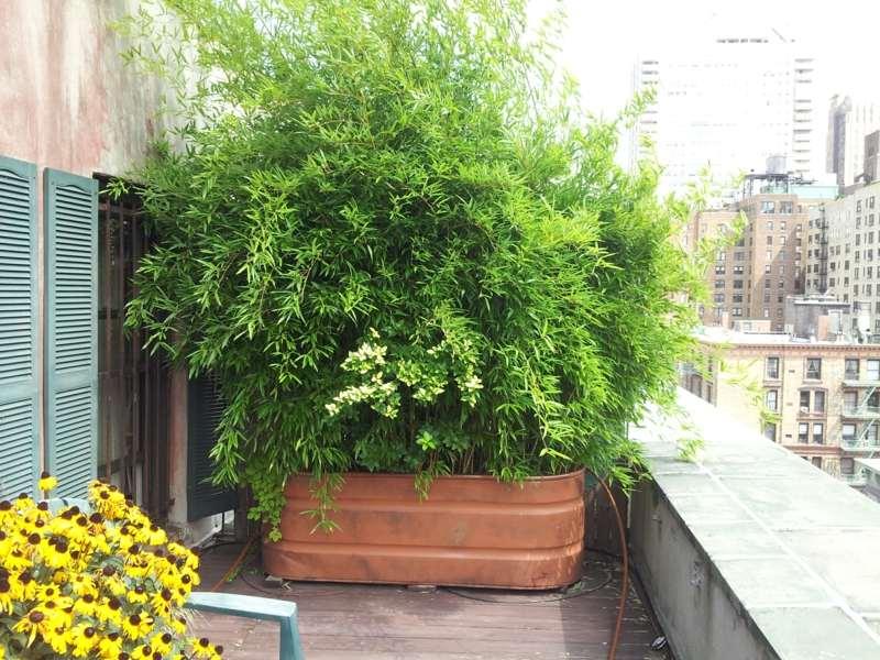 bambus im kubel als sichtschutz und deko auf der terrasse terrassen 1 28