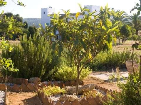 gartengestaltung obstbäume was pflanzen unter obstbäumen - angemessene unterpflanzung
