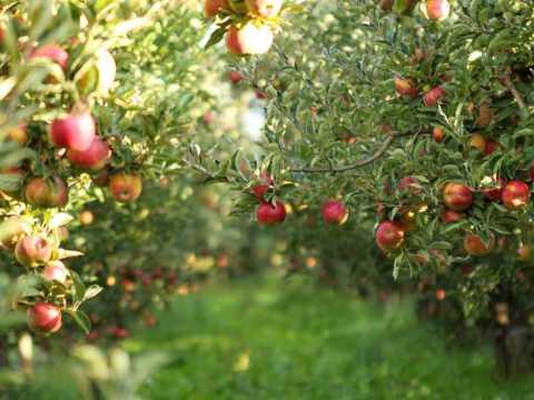 gartengestaltung obstbäume wie sie obstbäume für den garten richtig wählen und pflegen