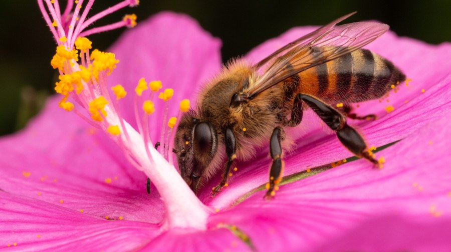 Environment Day Bees protect the advice of hobby gardeners