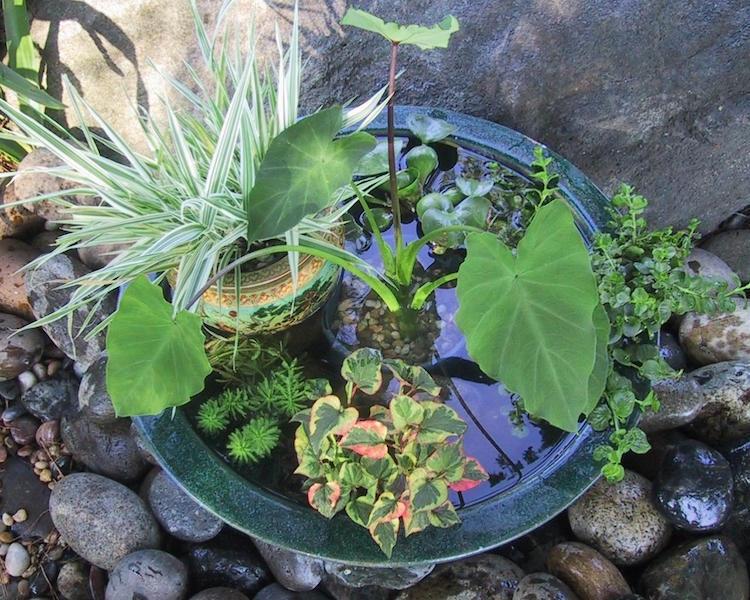 Faites Un Mini Bassin Fantastique Pour Votre Jardin Moderne