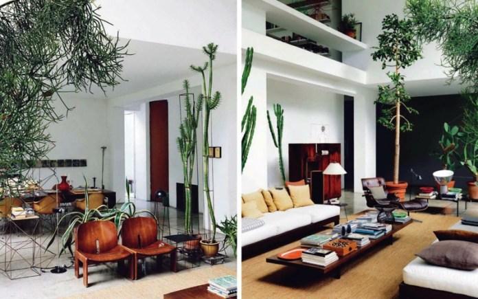 decoration-salon-palnets-vertes-exotiques-chaises-table-basse-bois-fauteuil-relax