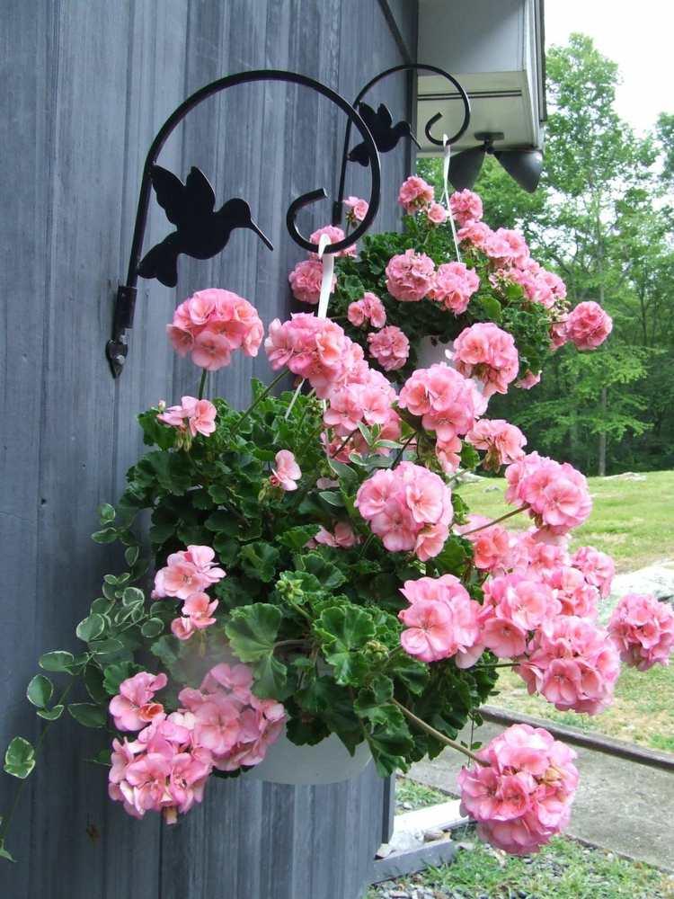 plantes retombantes vivaces ou fleurs