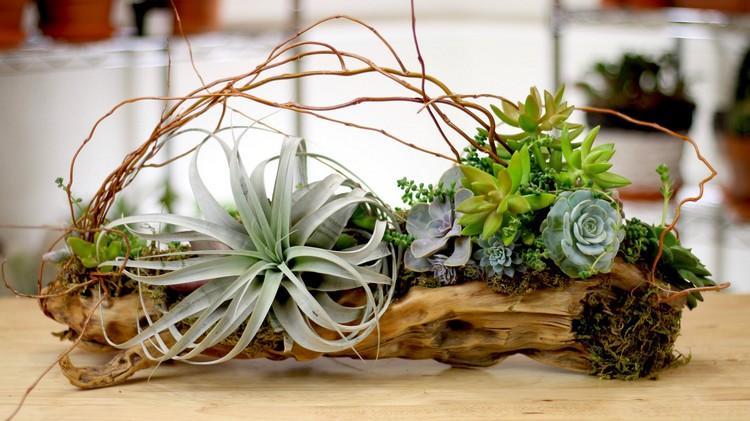 Dco Bois Flott Amp Plantes Succulentes La Nature S