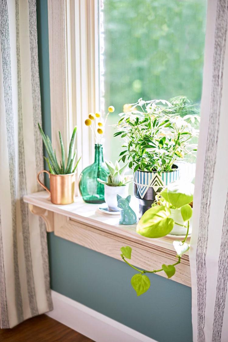 plantes pour rebord de fenetre