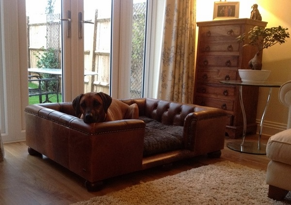 Best Couches For Dogs And Cool Dog Bed Ideas For Your Pets