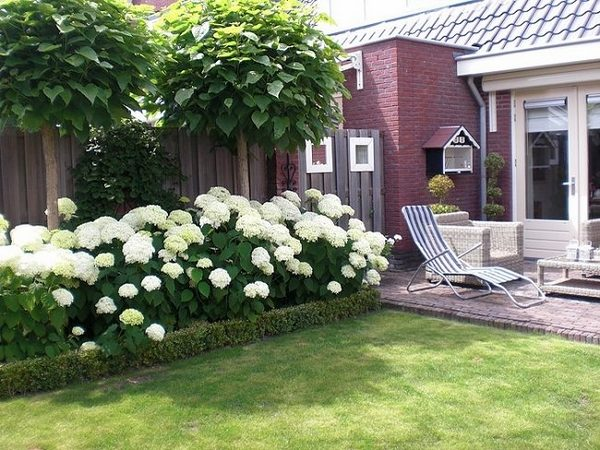Endless summer hydrangea - lovely garden flowers and patio ... on White Patio Ideas id=94255