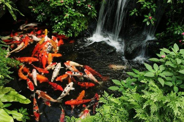 Fish Pond Filter System Design
