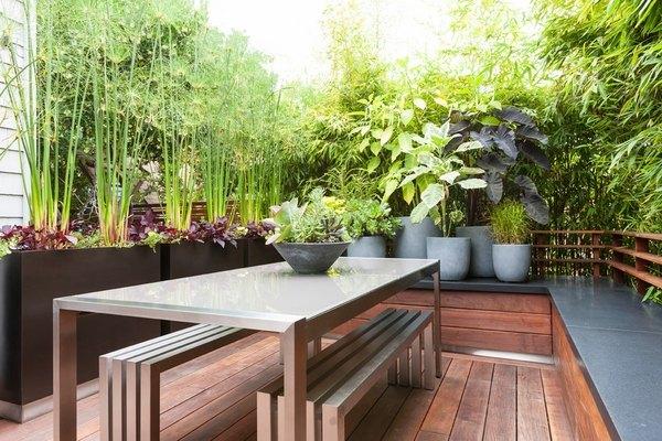 best screening plants 20 plants to