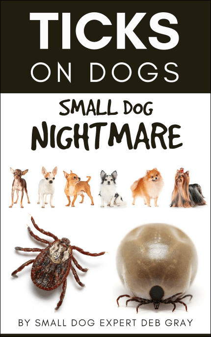 Ticks on dogs - small dog nightmare