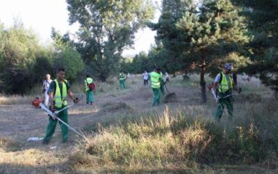 Primăria Bacău reziliază contractul pentru servicii de cosit mecanic