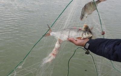 100 de kilograme de pește au fost redate mediului natural de către jandarmii băcăuani (FOTO)