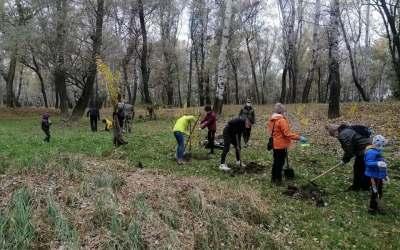 Activitate de weekend: Voluntarii au plantat copaci, pentru a salva pădurea Șerbănești